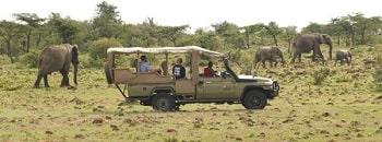 netafri.com-safari
