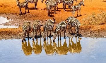 africa-tanzania-7-days-Safari