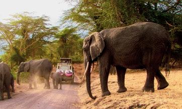 tanzania-5-days-tented-lodge