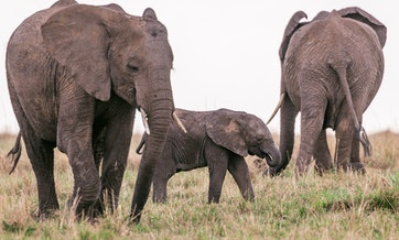 tanzania-6-day-camping-safari-and-5-days-zanzibar